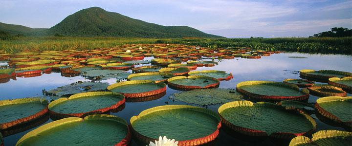séjour pantanal