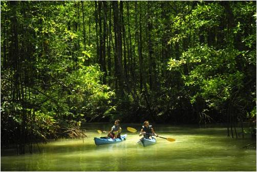 kayak dans le corcovado au costa rica