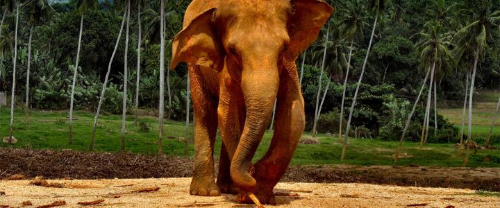 Le Sri Lanka, le paradis des animaux de l'Océan Indien