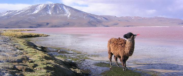 Voyage en Bolivie, exploration de l'Altiplano