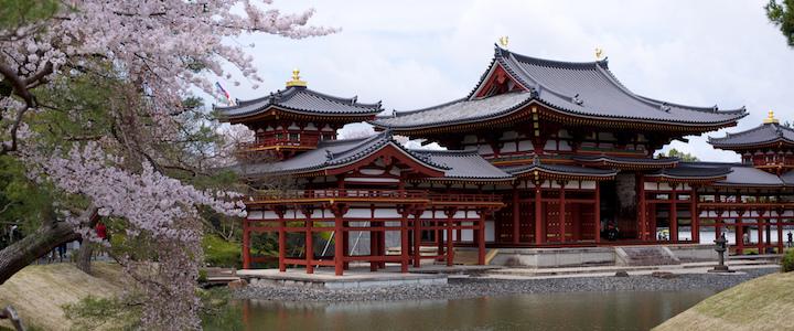 Partir admirer les cerisiers en fleurs à Kyoto