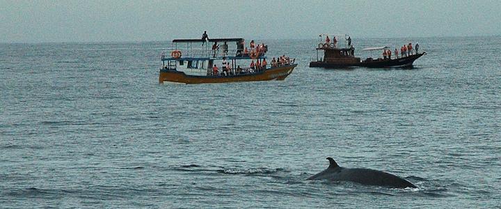 observation des baleines à Mirissa