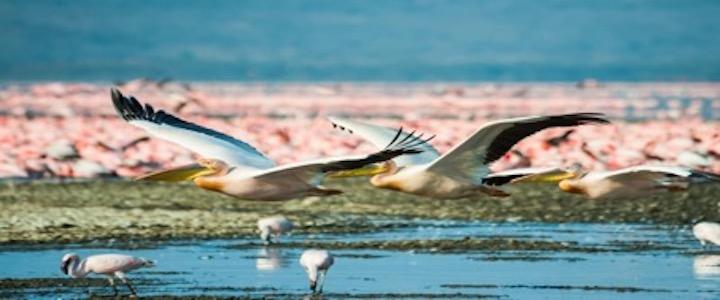 oiseaux kenya