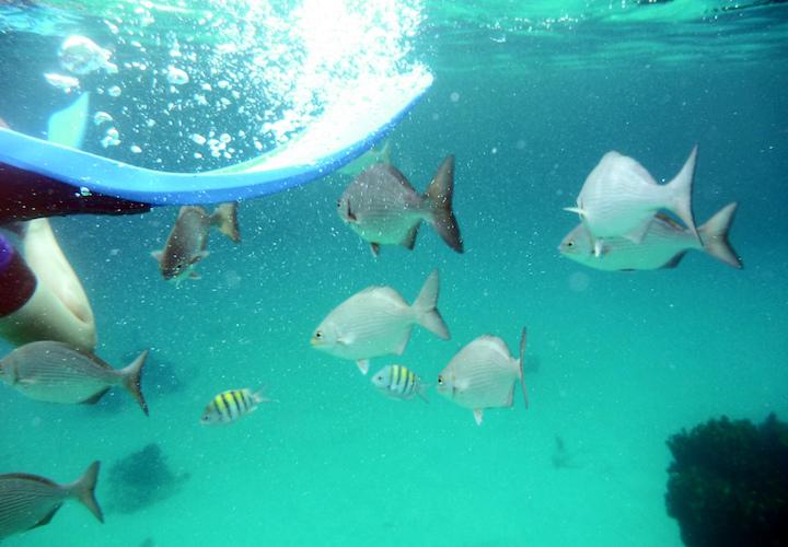 snorkelling coral varadero