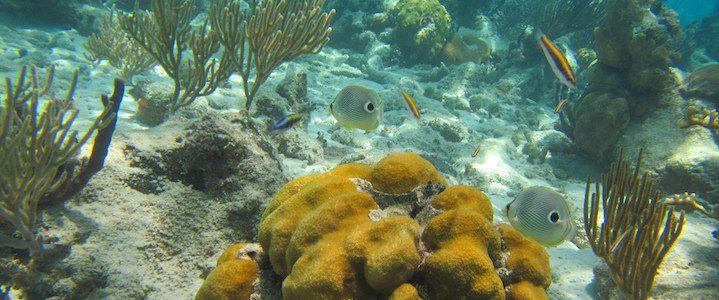 Les meilleurs spots de snorkelling à Cuba
