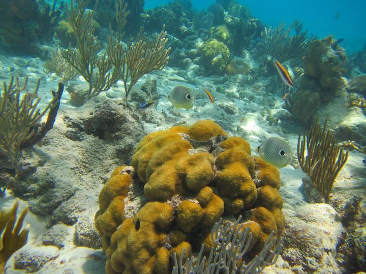 snorkelling cuba Punta Perdiz