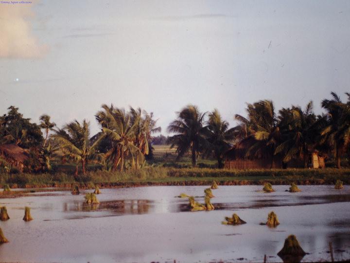 delta du mekong vietnam