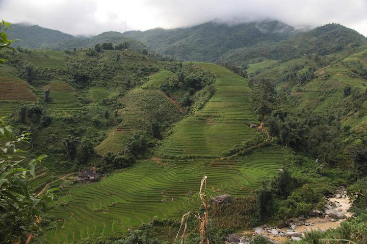 montagnes rizieres sapa vietnam