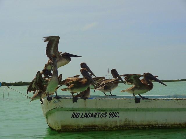 excursion bateau rio lagartos