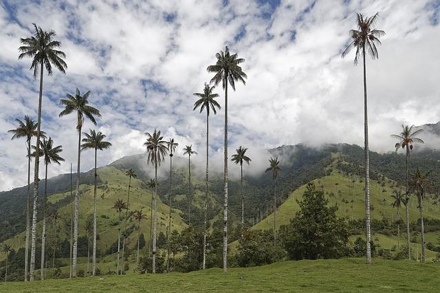 vallée de la Cocora