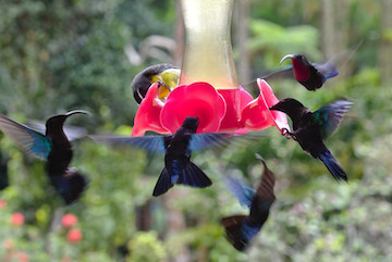 fleurs colibri