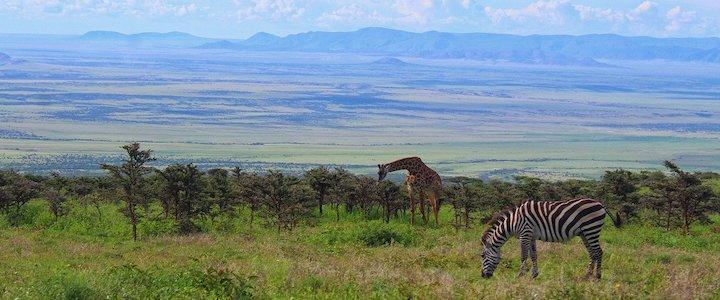 faune sauvage tanzanie